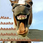 [Bild: funny_animals_01_laughing_horse.jpg]