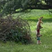 Piotruś Królik / Peter Rabbit (2018) PLDUB.BRRip.XviD-GR4PE   Dubbing PL