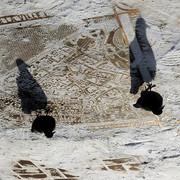 Демилимпиада. Голосование, 5-й этап, фото *