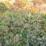[Εικόνα: bush.jpg]