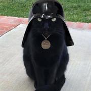 [Image: Darth_Vader_Cat.jpg]