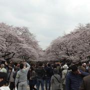 4923_Tag_11_Tokyo_Tag_1_Ueno_Park.jpg