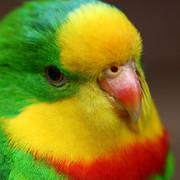 [Resim: papagan.jpg]