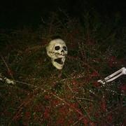 [Image: Skeleton-Bush.jpg]