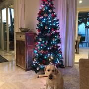 shania_christmasmelody122517_1