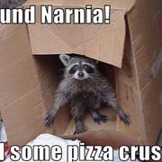 [Image: Funny_raccoon.jpg]