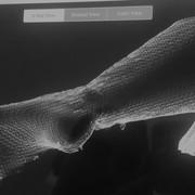 foot_scan
